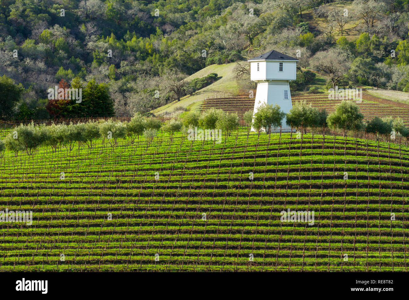 Water and Wine - Water tower above vineyard rows. Geyserville, California USA Stock Photo