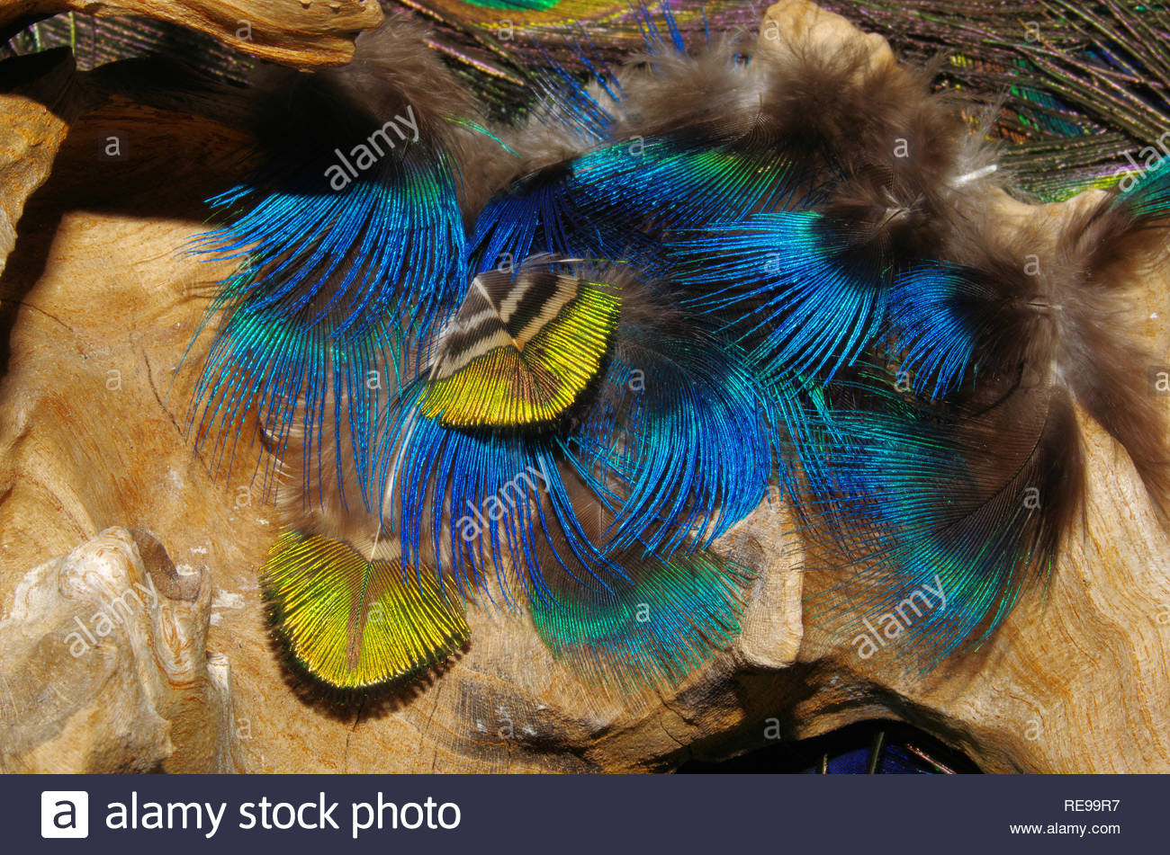 small landscape with feathers, staged on a root - Stock Image