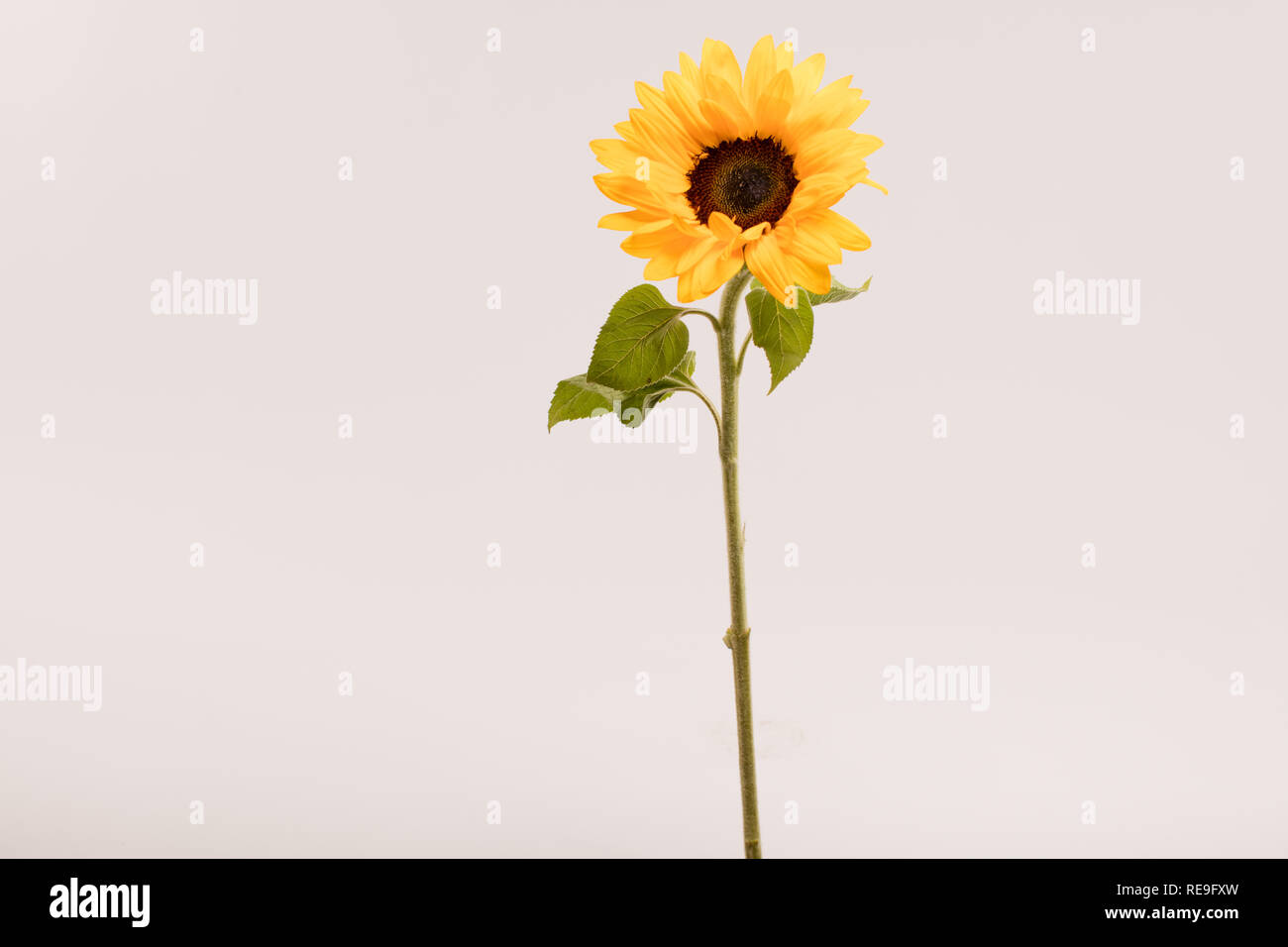 Summer Flower - Stock Image