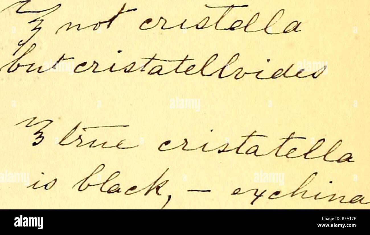 . Conspectus generum avium. Birds; Birds. 1 yffiA. OTL^, ^^d^^a^^ f?j?Jt 5. Pastor elegans, Less. (Sturnio erythropygia, Bhjth.) Voyage Belang. Ois. t. 6. ex Asia or. China. Minor:griseus ; alis, caudaque aeneo-nigris: tcctricibus ala- rum abdomineque alhis: mento, crisso, lateribus, uropygio, tectricumque apice lato, rufis. 6. Turuus pagodarumGm. (rnelanocephalus, Vahl. Sturnus subroseus, Shaw. - Maina sylvesfris , Hodgs. Gracula pagodaruua, Daud. - Acridoth. pagodarum , Vieill. - Sturnia pagodarum, Blyth.)Lev. Afr. t. 92. r. Mem. Soc. Copenh. III. t. 8. ex India or. Cinereus; subtus, et in c - Stock Image