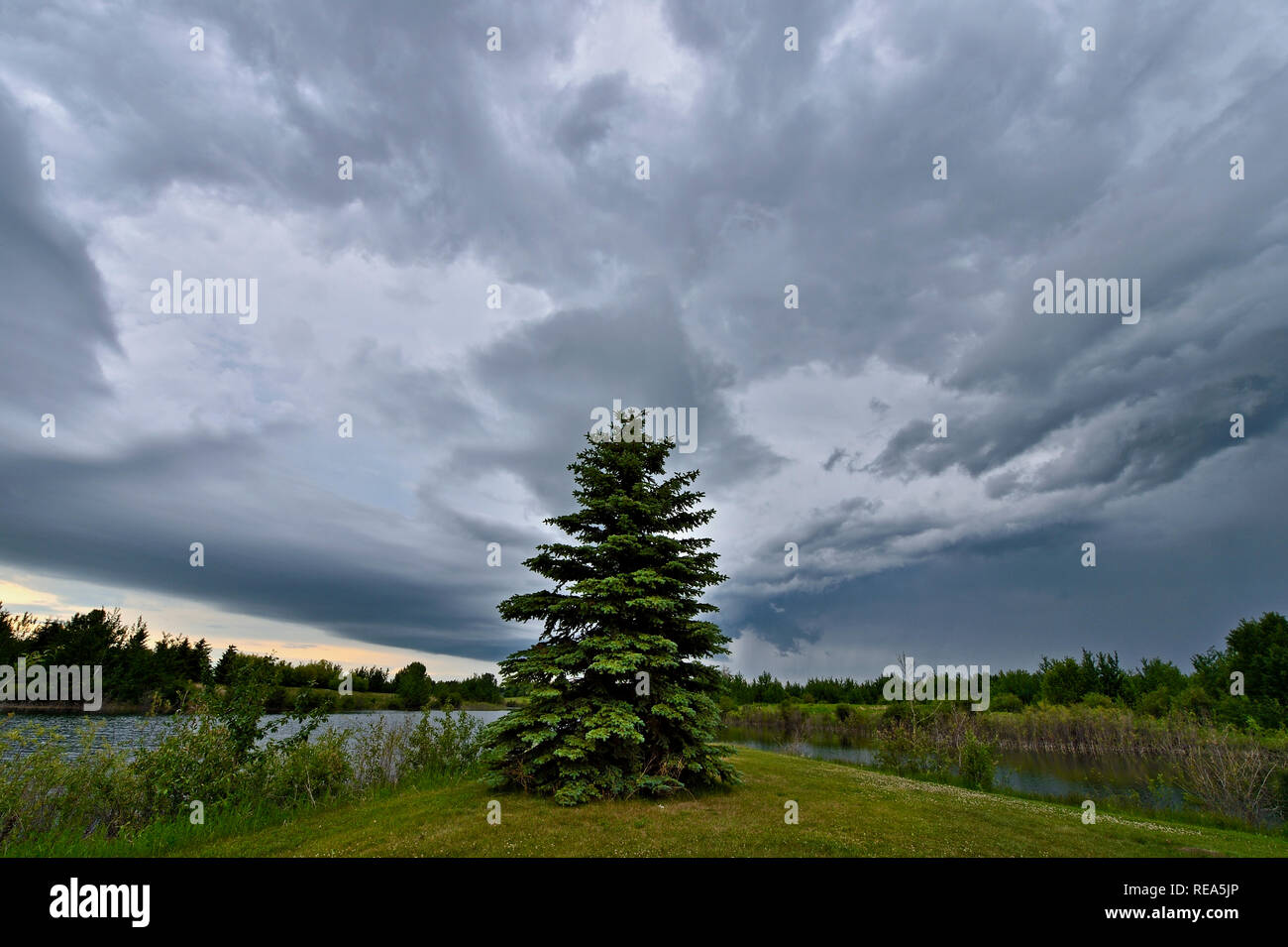 A wide angle horizontal image of storm clouds moving over a natural pond and green space in rural Alberta Canada. - Stock Image