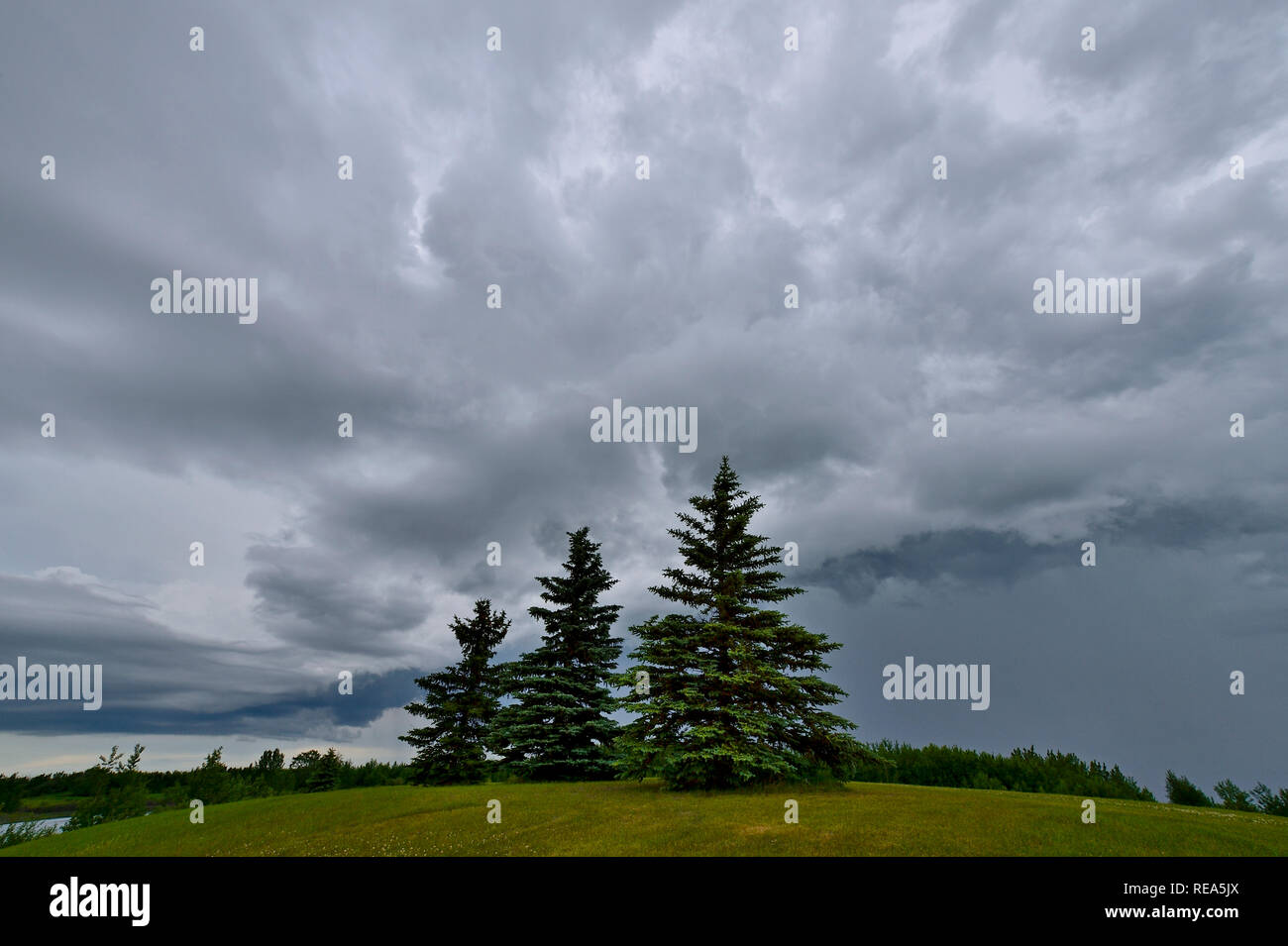 A wide angle landscape image of storm clouds moving over a natural pond and green space in rural Alberta Canada. - Stock Image