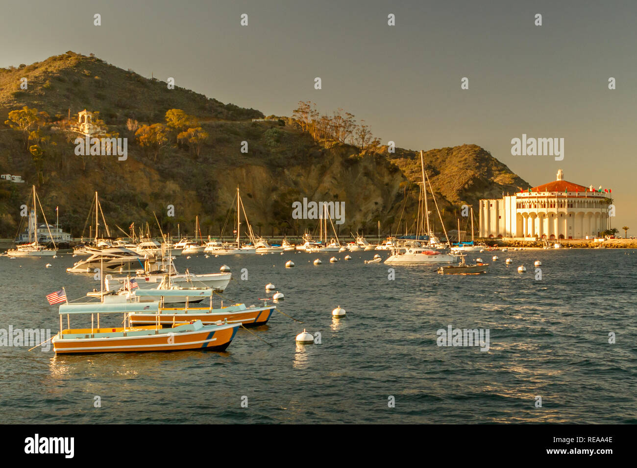 9481066331dd Catalina Sunset - Late afternoon sunshine warms harbor boats and  The  Casino.  Santa