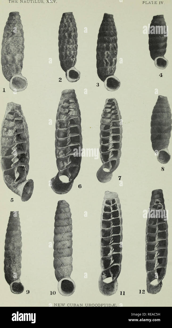 Conchologists Stock Photos Images