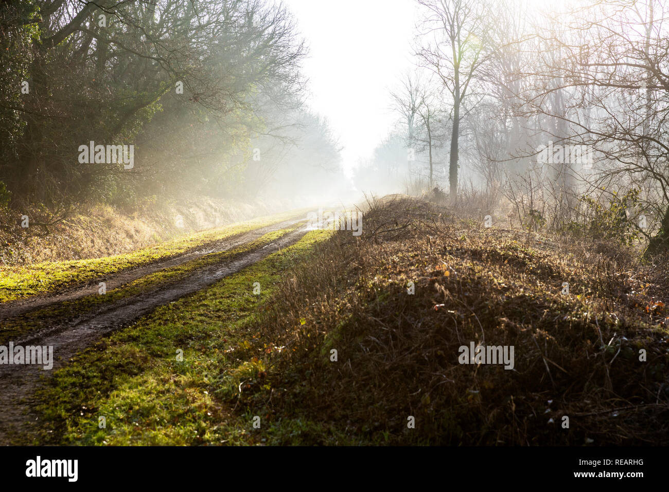 Legbourne Woods, Lincolnshire, UK. 21st January, 2019. UK Weather: Legbourne Woods, Lincolnshire, UK. 21/01/2019 Misty start to the day in Legbourne woods, mist highlighted by the sun burning through the trees in Legbourne Woods near Louth, Lincolnshire UK England Credit: Tommy  (Louth)/Alamy Live News Stock Photo