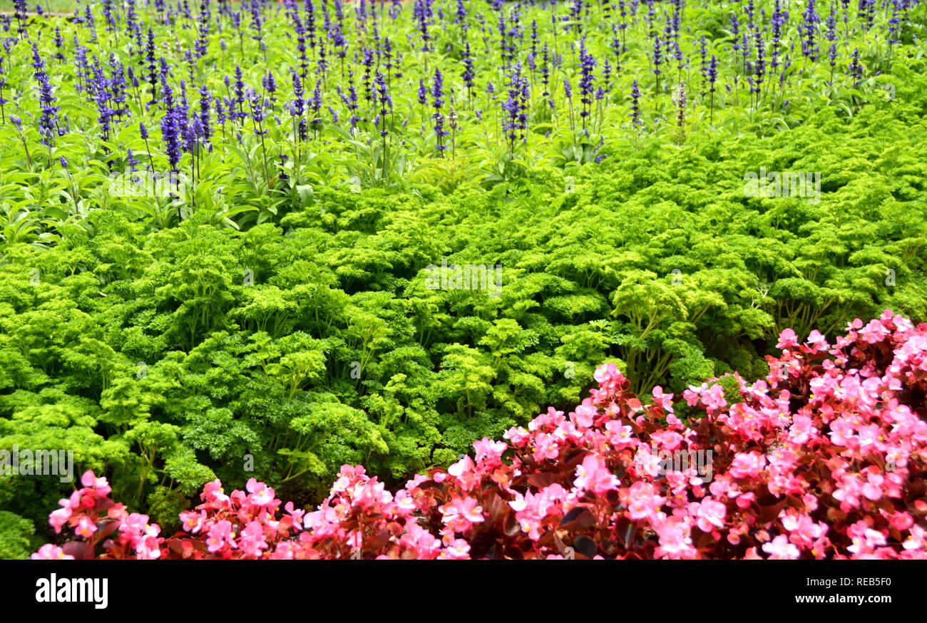 A simple yet effective summer planting scheme at the Wellington Botanic Gardens - Stock Image