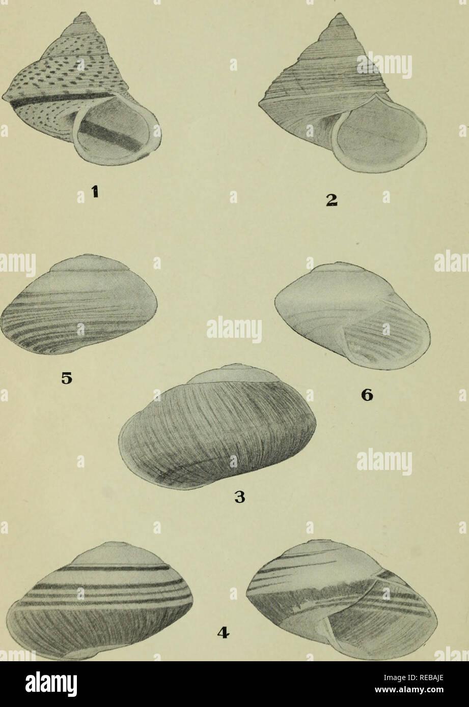 The Conchologists Exchange Mollusks THE NAUTILUS XXII