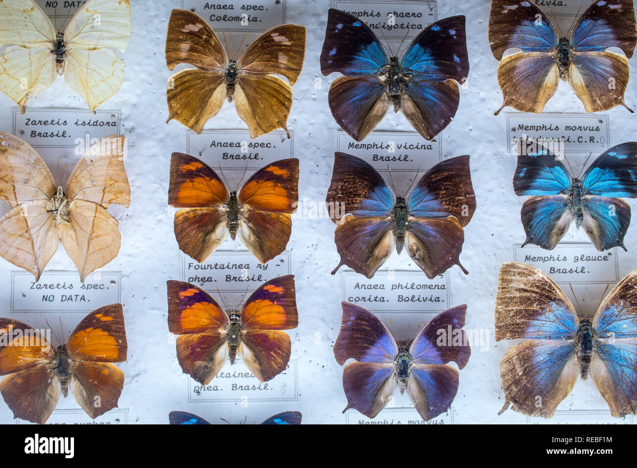 A colorful entomological collection of pinned tropical butterflies, With etiquettes. Stock Photo