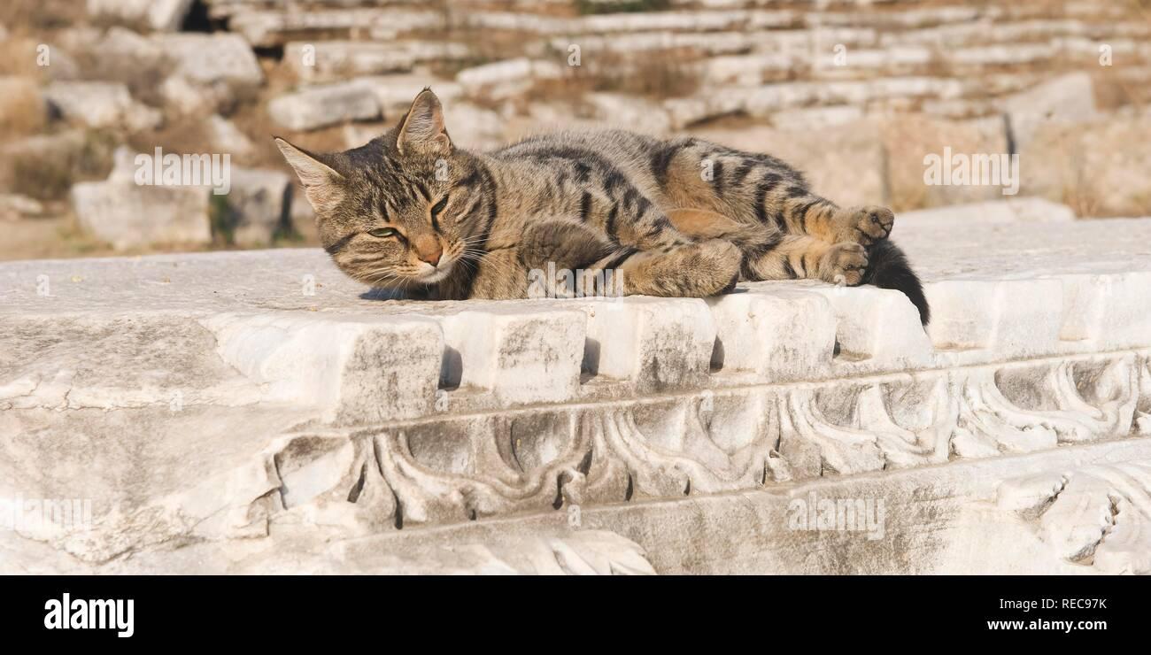 Cat in the Perga Stadium, Antalya, Turkey - Stock Image