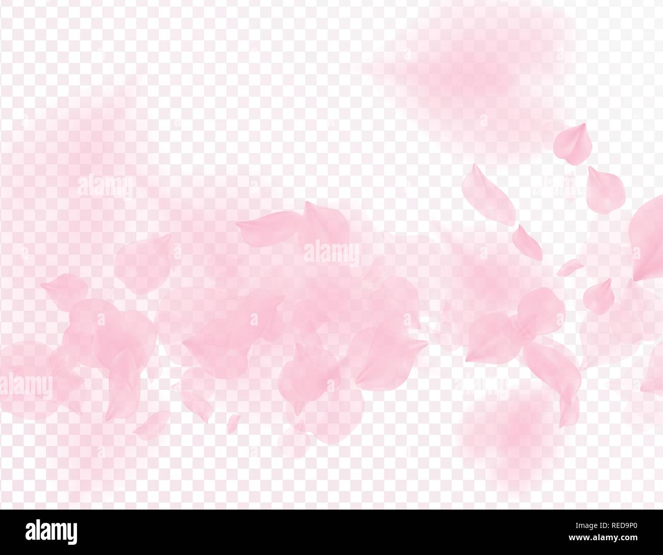 Pink sakura flower falling petals vector transparent background. 3D romantic valentines day illustration. Spring tender light backdrop. Overlay tender - Stock Vector