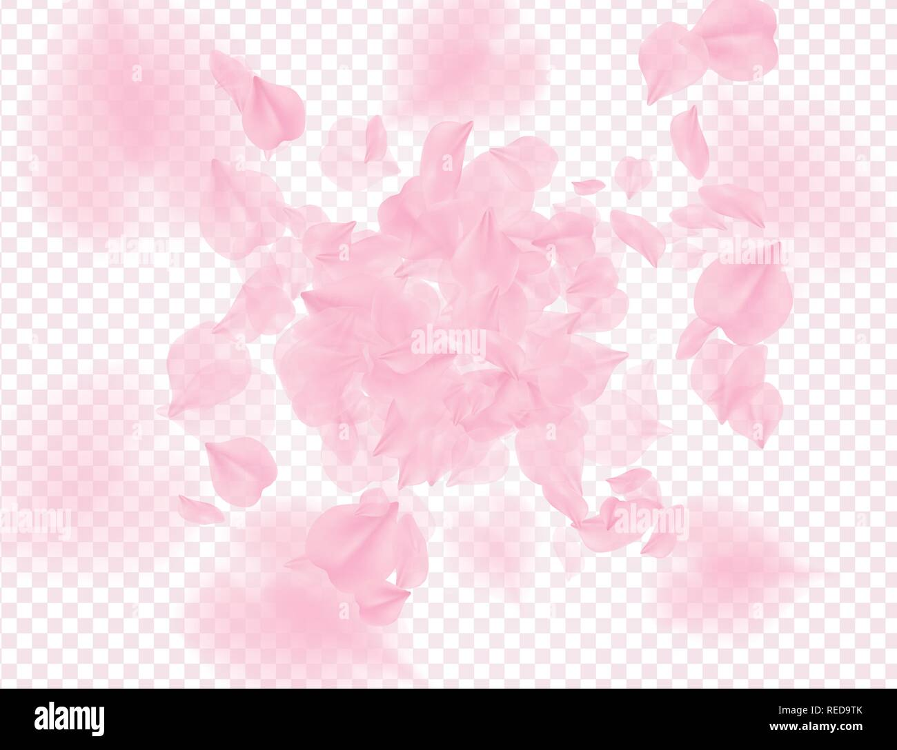 Pink roses petals falling on transparent background. Vector overlay Valentines background. Sakura flower 3D romantic illustration. Spring tender light - Stock Vector