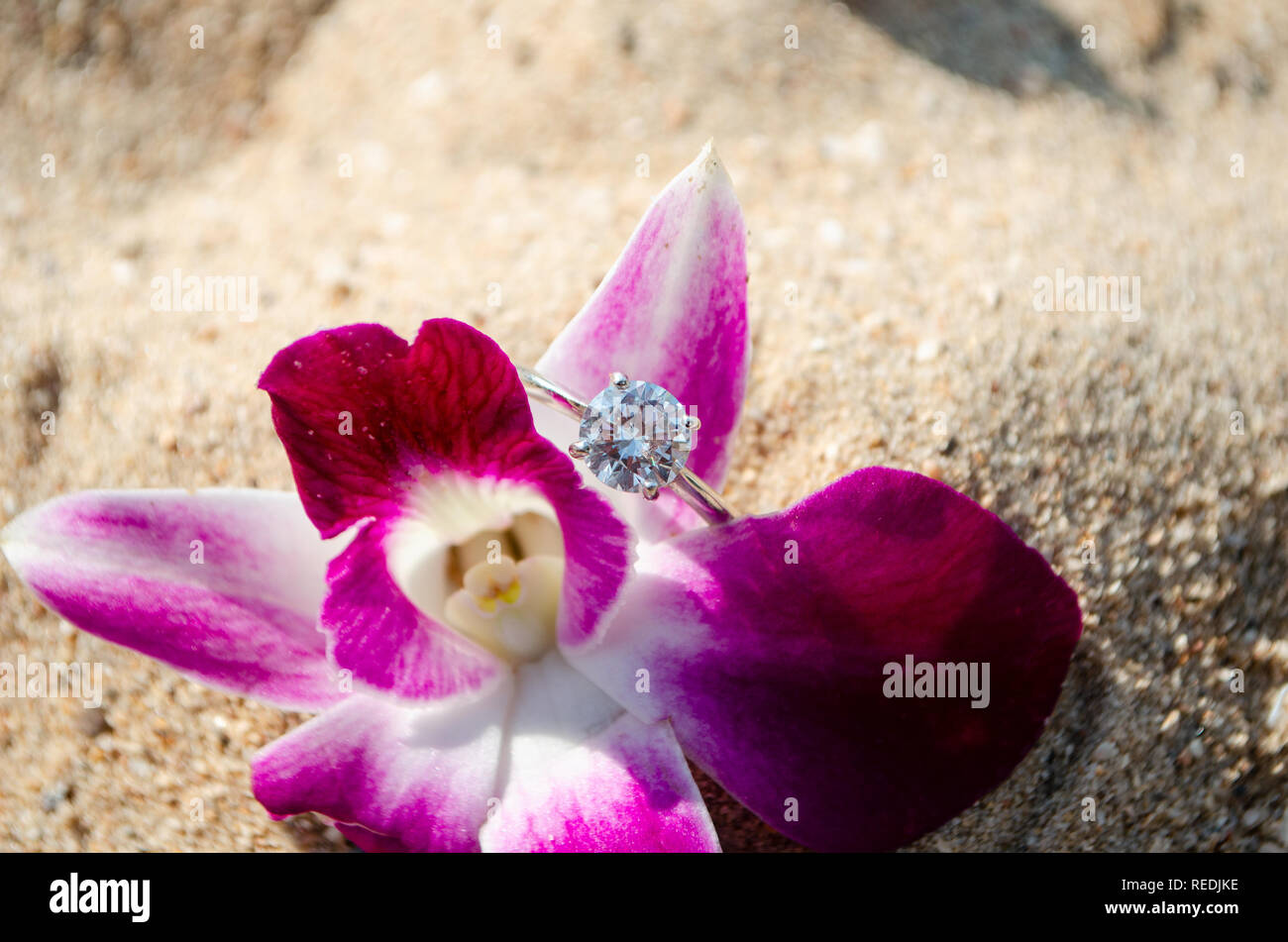 wedding ring on  Plumeria flower in the sand on the beach Stock Photo