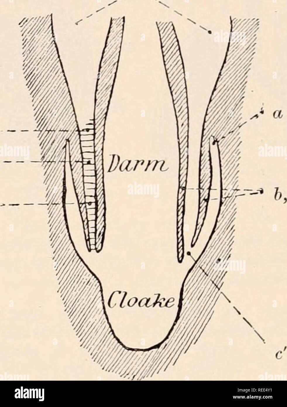 Comparative Anatomy Example Anatomy Drawing Diagram