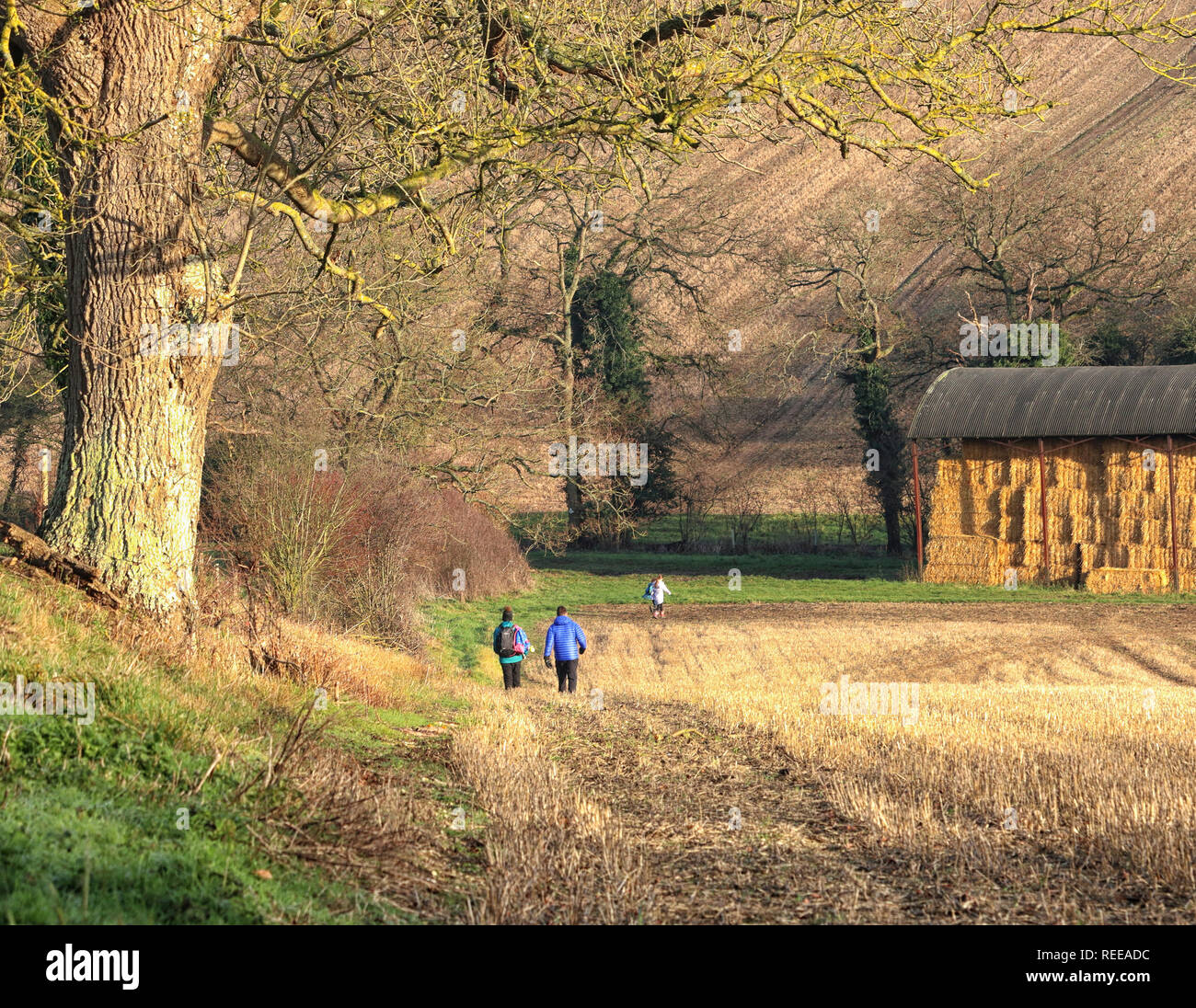 A family rambling on a downhill path through a field in Winter sunshine in the Chiltern Hills - Stock Image