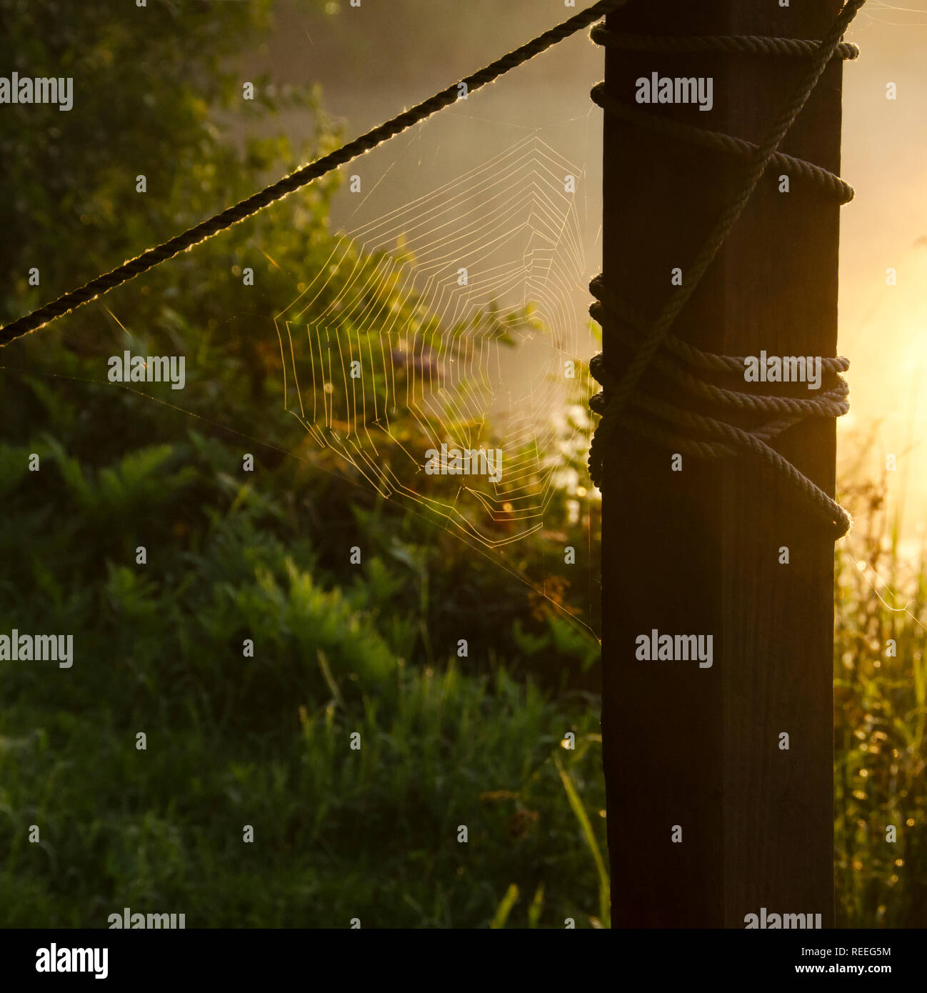 The sun rising behind a pylon lighting up a spider web and rope - Stock Image