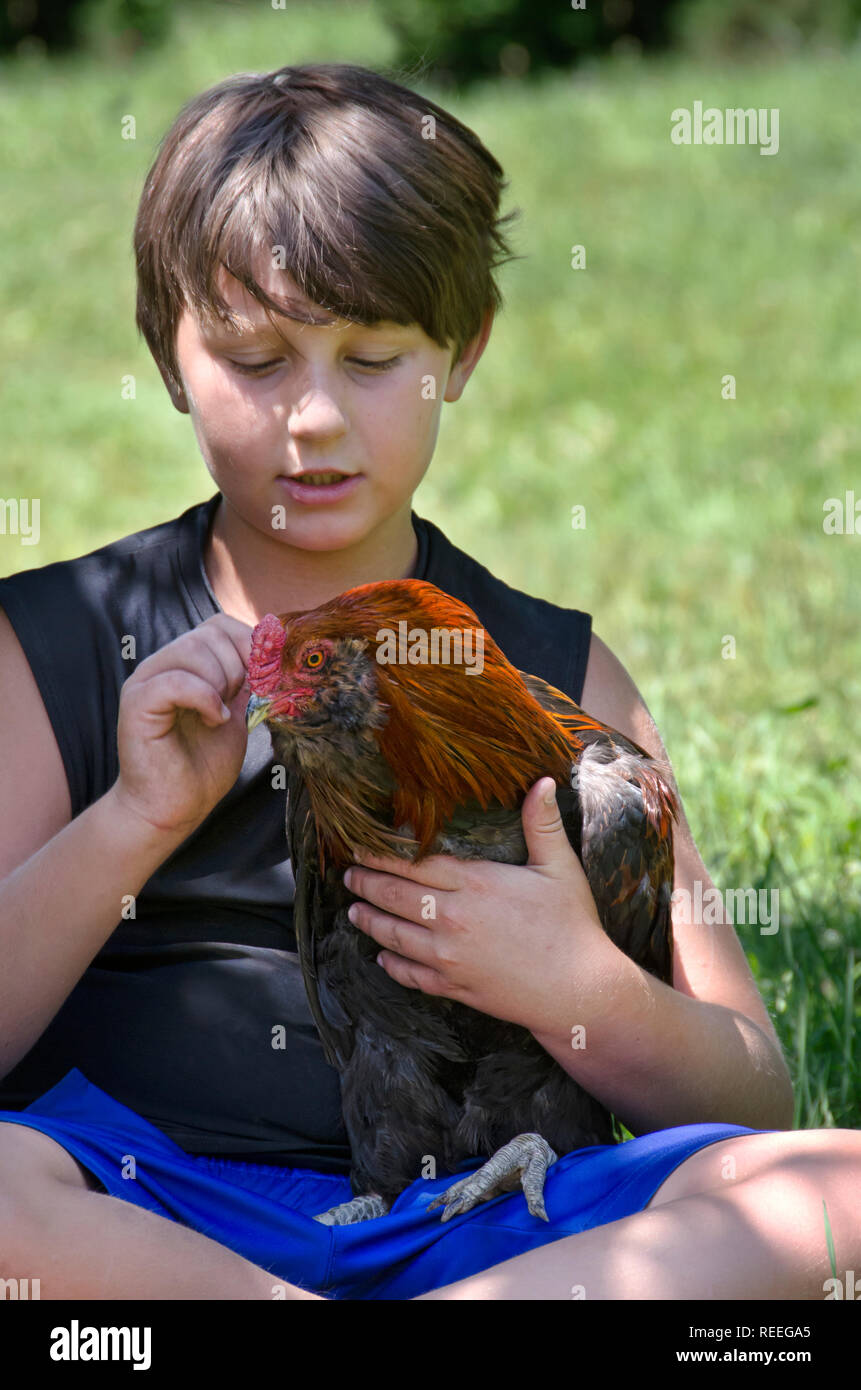 A young boy holds his pet rooster chicken - Stock Image