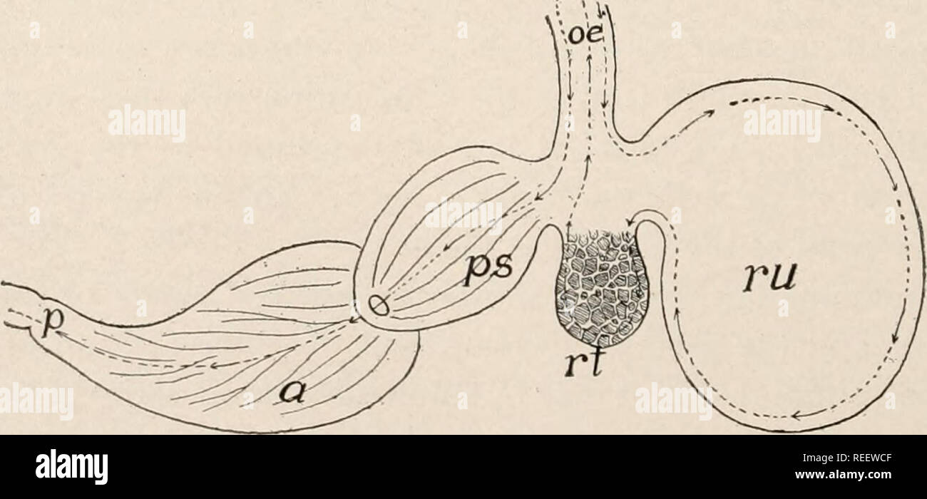 Comparative Anatomy Of Vertebrates Anatomy Comparative