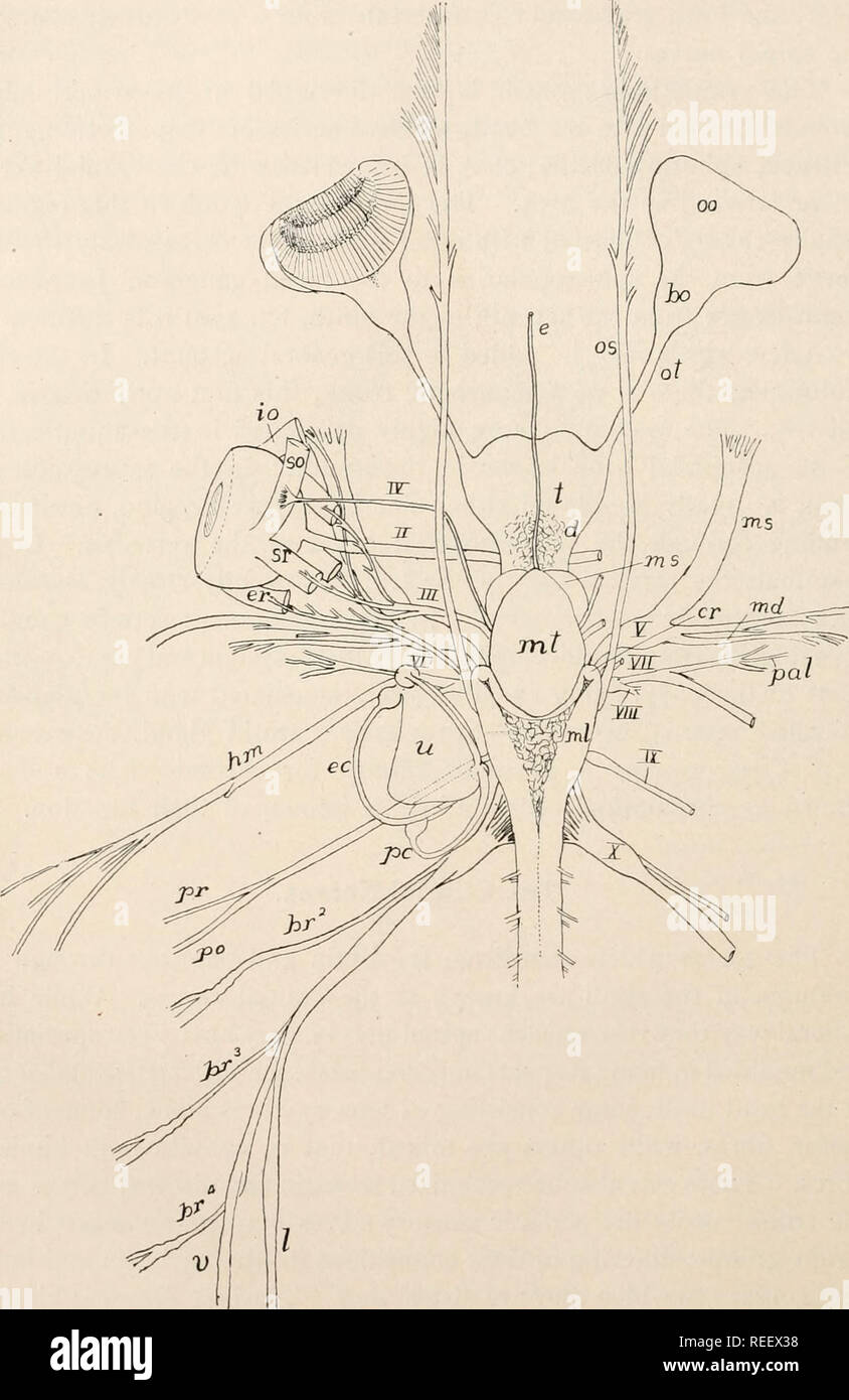Comparative anatomy of vertebrates  Anatomy, Comparative
