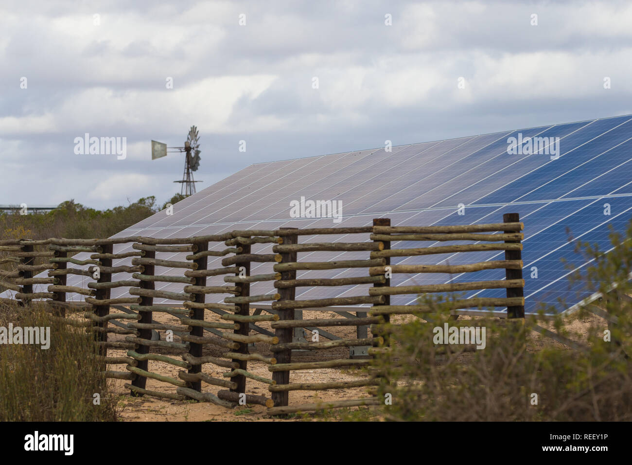solar energy panels, photovoltaic, in long bank in nature to convert the sunlight into energy for green living in South Africa with wind pump behind - Stock Image
