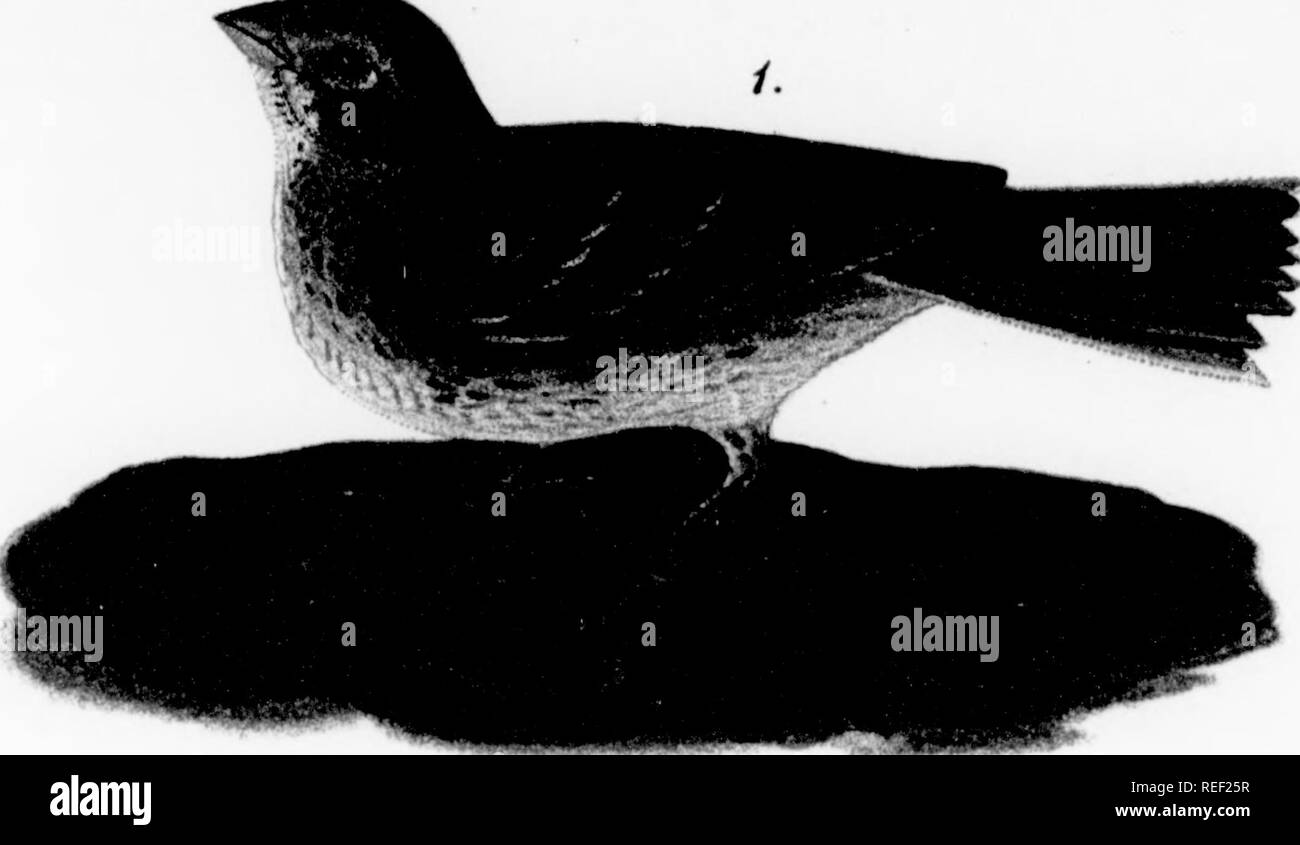 Dead Bird Feet Black and White Stock Photos & Images - Alamy