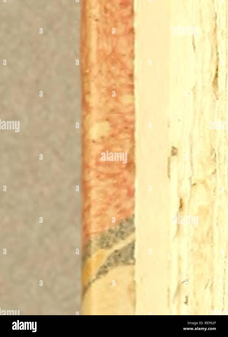 """. Compendio de observaçoens, : que fórmaõ o plano da viagem politica, e filosofica, que se deve fazer dentra da patria. Dedicado a Sua Alteza Real o Serenissimo Principe do Brasil. Natural history; Mines and mineral resources; Silk industry; Imprint 1783. no Parte Ih Çap.XVL L Obferyará : Se tem Cabeça """" ( a) Narís , Ouvidos , Olhos, ( í ) Se fe6 Inteftinos . Mollufcos , Tefta- cem ; e aqui fará averiguação fobre as Conchas' dos Vermes, e fobre os Comes. Sobre as Conchas.. II. Se fáS Univalves , BivaWeí, Miltivalves, (O de cuja divifaõ h fer* ( ; O refe- rido Siimaferdaó diz que achou na Tcnta - Stock Image"""