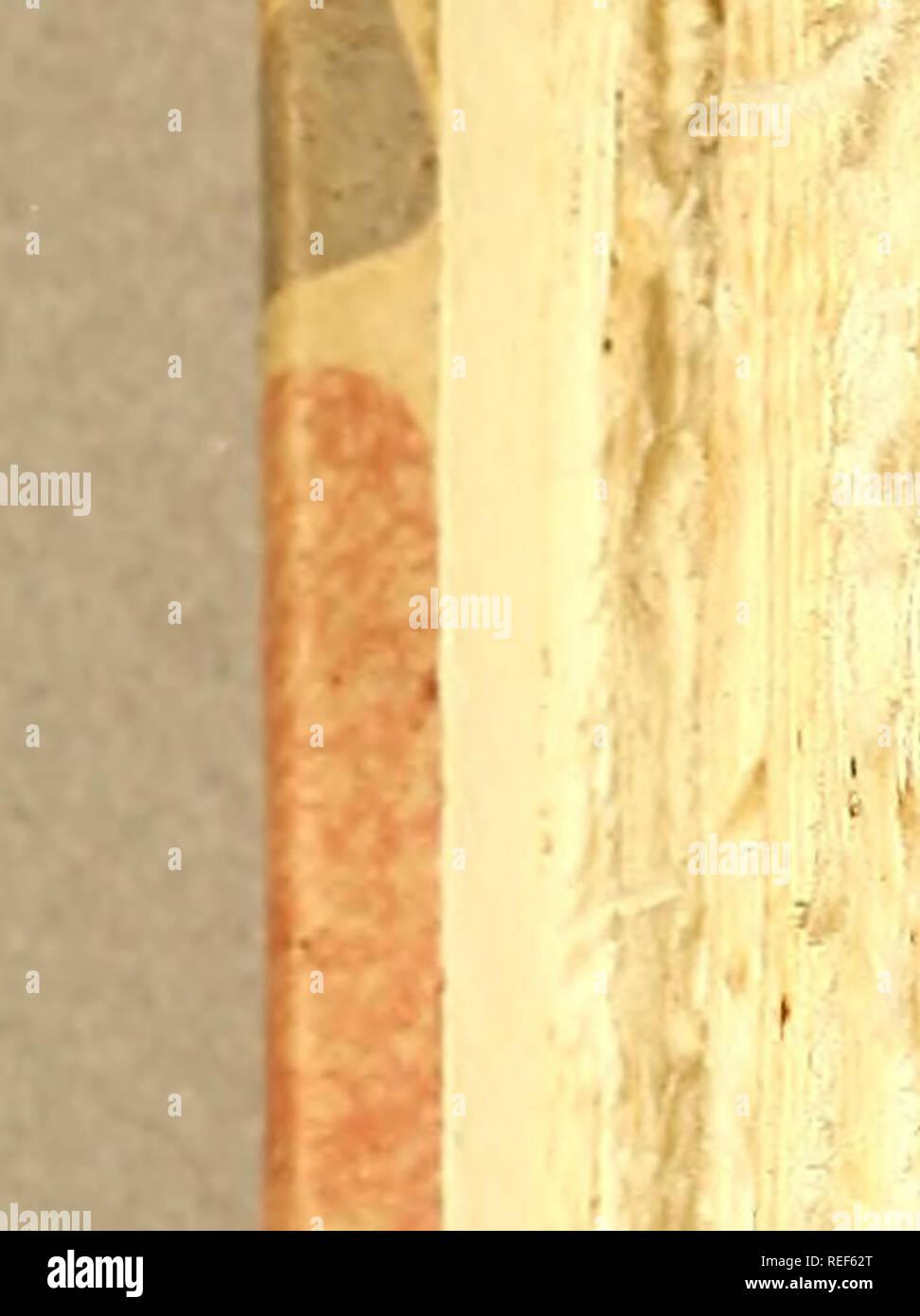 """. Compendio de observaçoens, : que fórmaõ o plano da viagem politica, e filosofica, que se deve fazer dentra da patria. Dedicado a Sua Alteza Real o Serenissimo Principe do Brasil. Natural history; Mines and mineral resources; Silk industry; Imprint 1783. no Parte Ih Çap.XVL L Obferyará : Se tem Cabeça """" ( a) Narís , Ouvidos , Olhos, ( í ) Se fe6 Inteftinos . Mollufcos , Tefta- cem ; e aqui fará averiguação fobre as Conchas' dos Vermes, e fobre os Comes. Sobre as Conchas.. Please note that these images are extracted from scanned page images that may have been digitally enhanced for readability - Stock Image"""