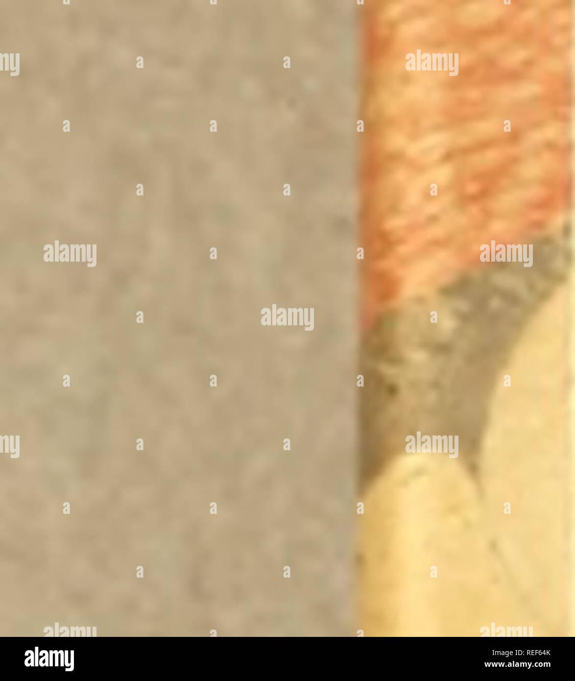 . Compendio de observaçoens, : que fórmaõ o plano da viagem politica, e filosofica, que se deve fazer dentra da patria. Dedicado a Sua Alteza Real o Serenissimo Principe do Brasil. Natural history; Mines and mineral resources; Silk industry; Imprint 1783. §4 Parte II. Çap. XL nes, Leites, Óleos , Pelles, Lans ; fe para a caqa ; para levar tranfportcs, para divertimento, &c. Caqa. X!L Com que laços, redes 3 ina- chinas coílumaõ caqar-fe, e em que tempo. CAPITULO XII. íí Das Aves. PAra bem defcrever as Aves, fe no- tarão as circunftancias da Cabeça , Tronco , e Membros.. Please note that the - Stock Image