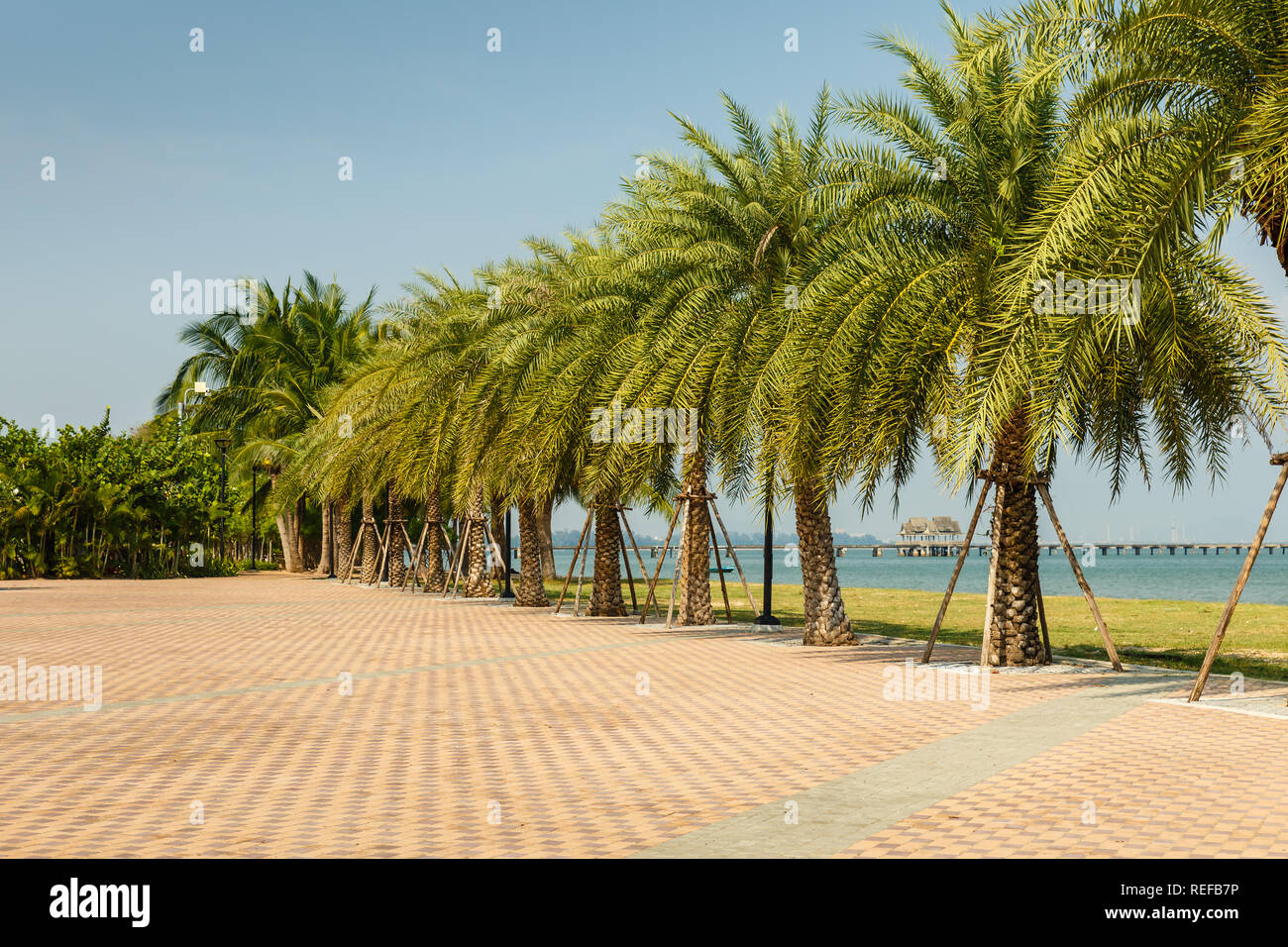 palm alley on the coast of the Gulf of Siam, beautiful landscape Thailand Stock Photo