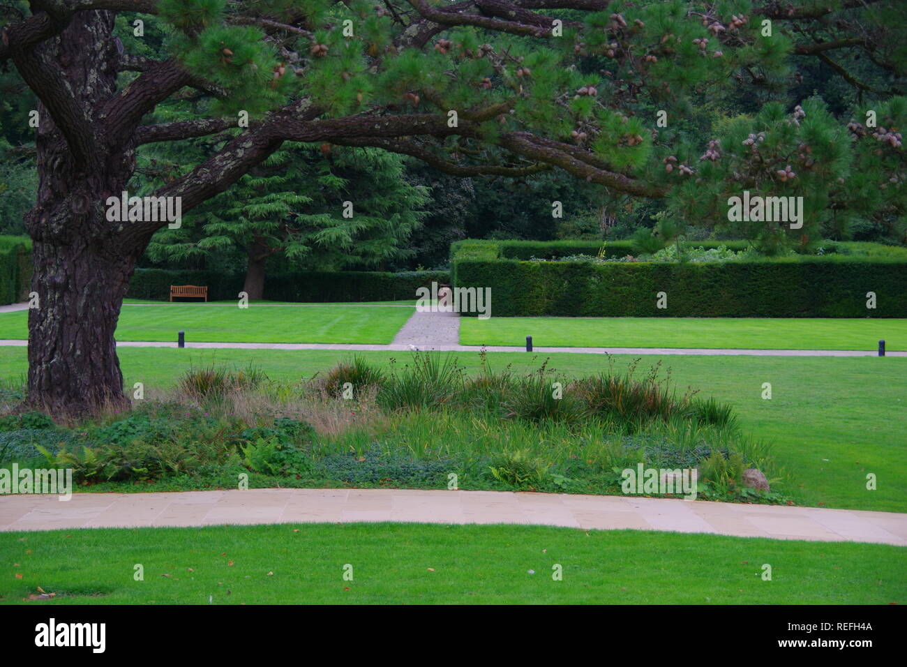 The Lawn at Buckfast Abbey, Under a mighty Pine Tree. Dartmoor National Park, Devon, UK. - Stock Image