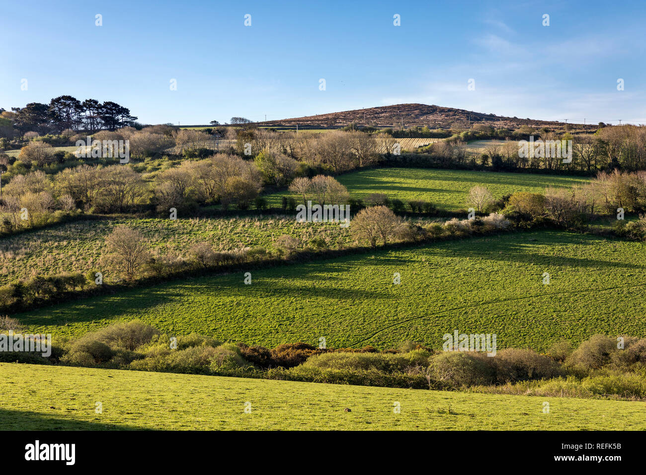 Godolphin Hill and Hedgerows; West Cornwall; UK - Stock Image