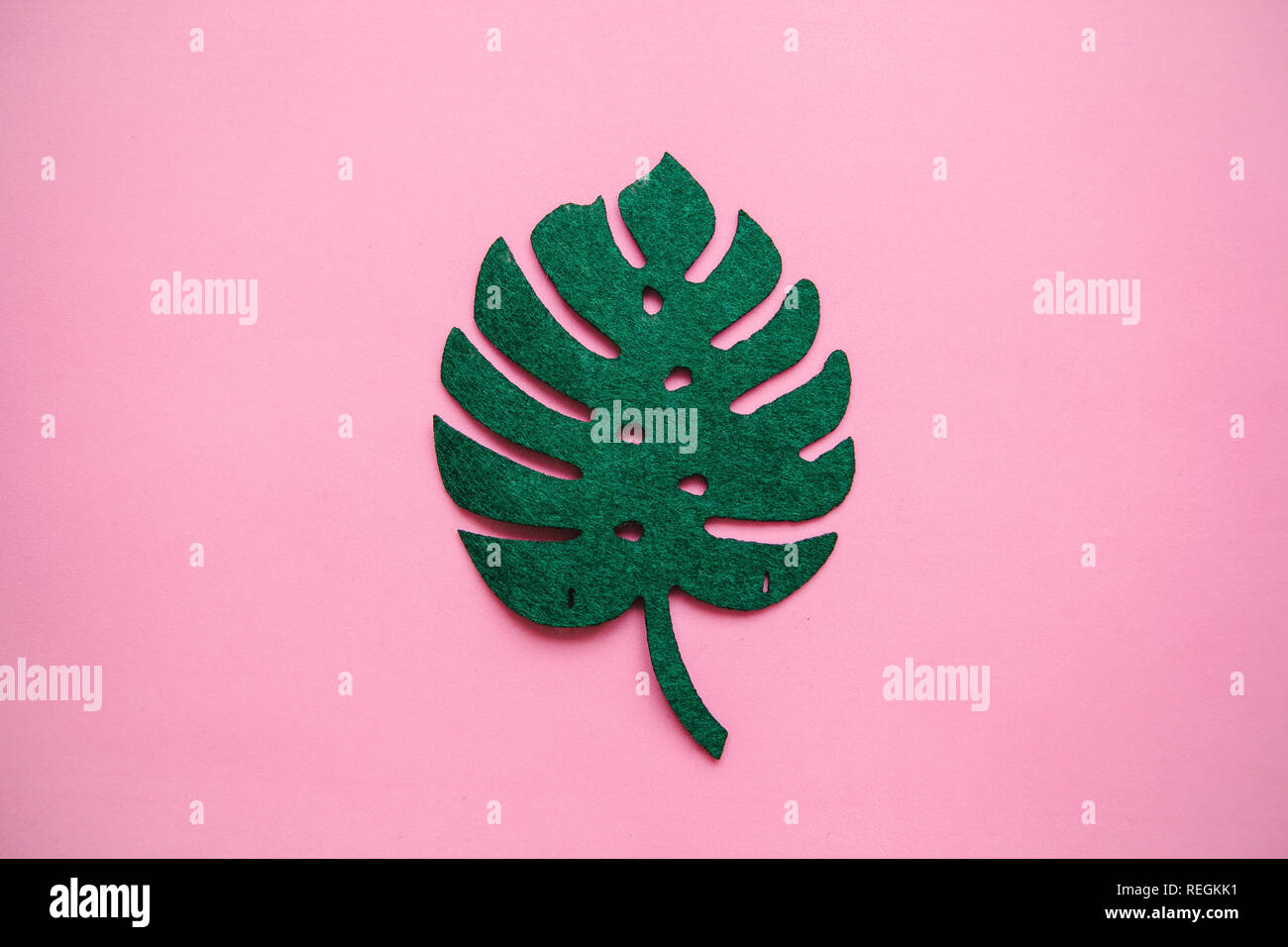 Monstera leaf on a pink background in minimal style. - Stock Image