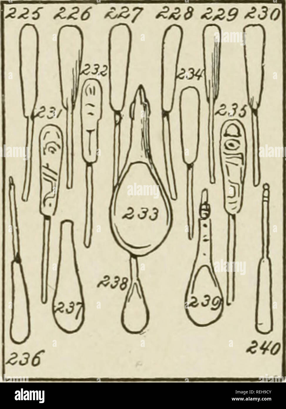 . The coast Indians of southern Alaska and northern British Columbia. Indians of North America; Indians of North America. EXPLANATION OF PLATE XLII.. Wooden Spoons from the Northwest Coast. Figs. 227, 229, 230, 236, and 240. Spoons. Of wood. Used especially for berries by all Northwest Indian ti-ibes. Cat. Nos. 20820-25, U. S. N, M. Kake Indians (Tlingits) Alaska. Collected by James G. Swan. Figs. 231, 232, and 235. Spoons. Of wood; painted. Cat. Nos. 1625:^-55, U. S. N. M. Tsimshian Indians, British Columbia. Collected by Dr. W. H. DaU. Pigs. 226, 227, 228, and 234. Spoons. Of wood; plain. Ca - Stock Image