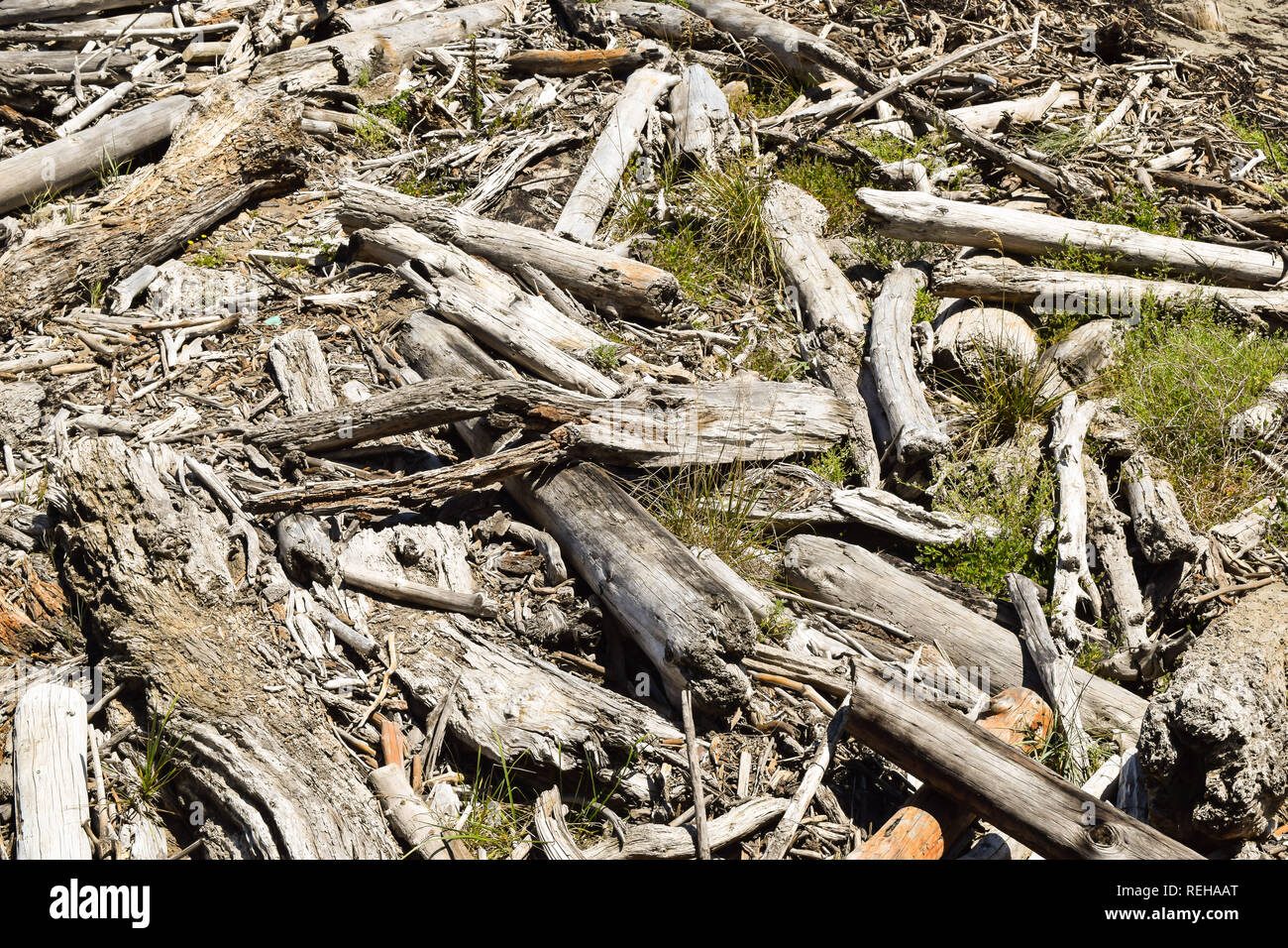 Driftwood covers grass and sand on the shore at Tolaga Bay, New Zealand - Stock Image