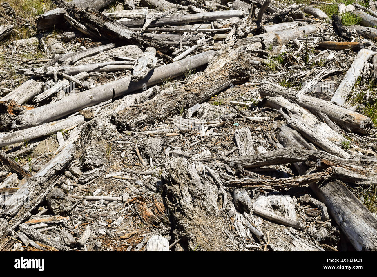 Driftwood patterned the sandy shore in Tolaga Bay, New Zealand - Stock Image