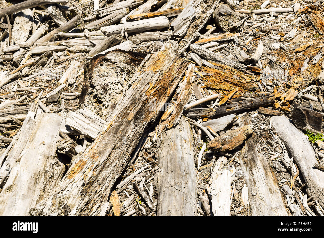 Driftwood covers the sandy shore in Tolaga Bay, New Zealand - Stock Image