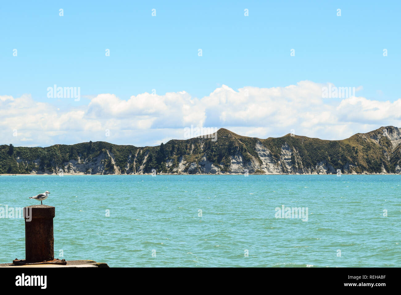 A seagull sits on the post at the end of the long wharf in Tolaga Bay, New Zealand - Stock Image
