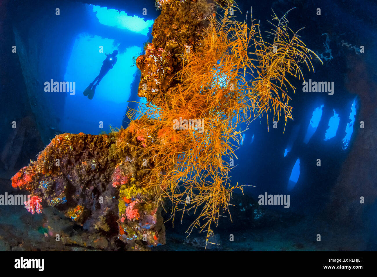 Storage Room, USAT Liberty, Wreck, Bali, Indonesia, Diving, diver, softcoral, Tulamben - Stock Image