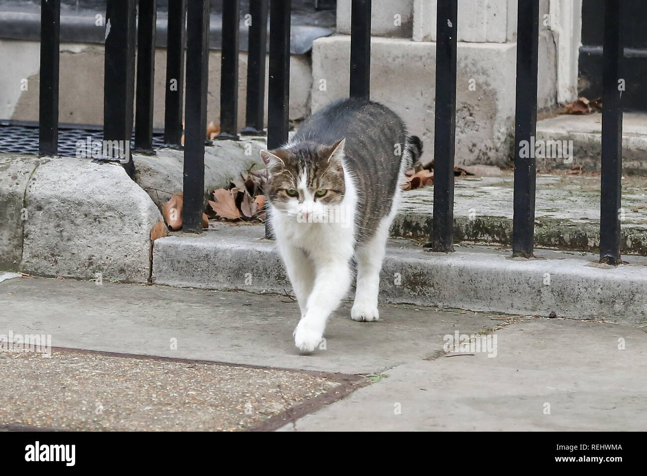 Larry, the 10 Downing Street cat and Chief Mouser to the