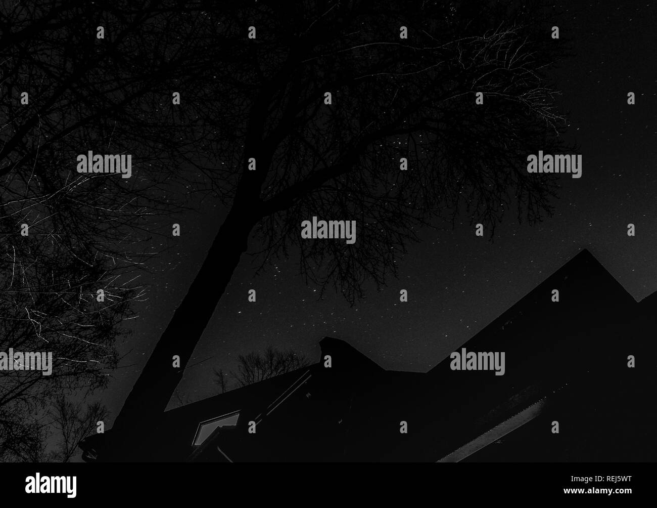 Starlight through the trees - Stock Image