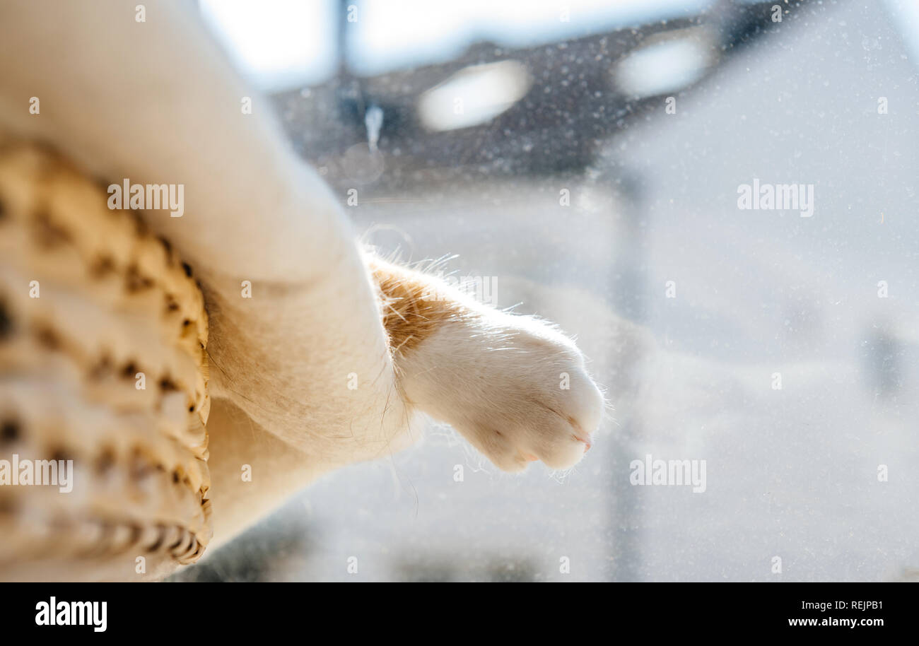 Fluffy paw of extremely cute cat deep sleep on the white wool blanket on a cat tree  warm spring day calm and peacefulness concept - Stock Image