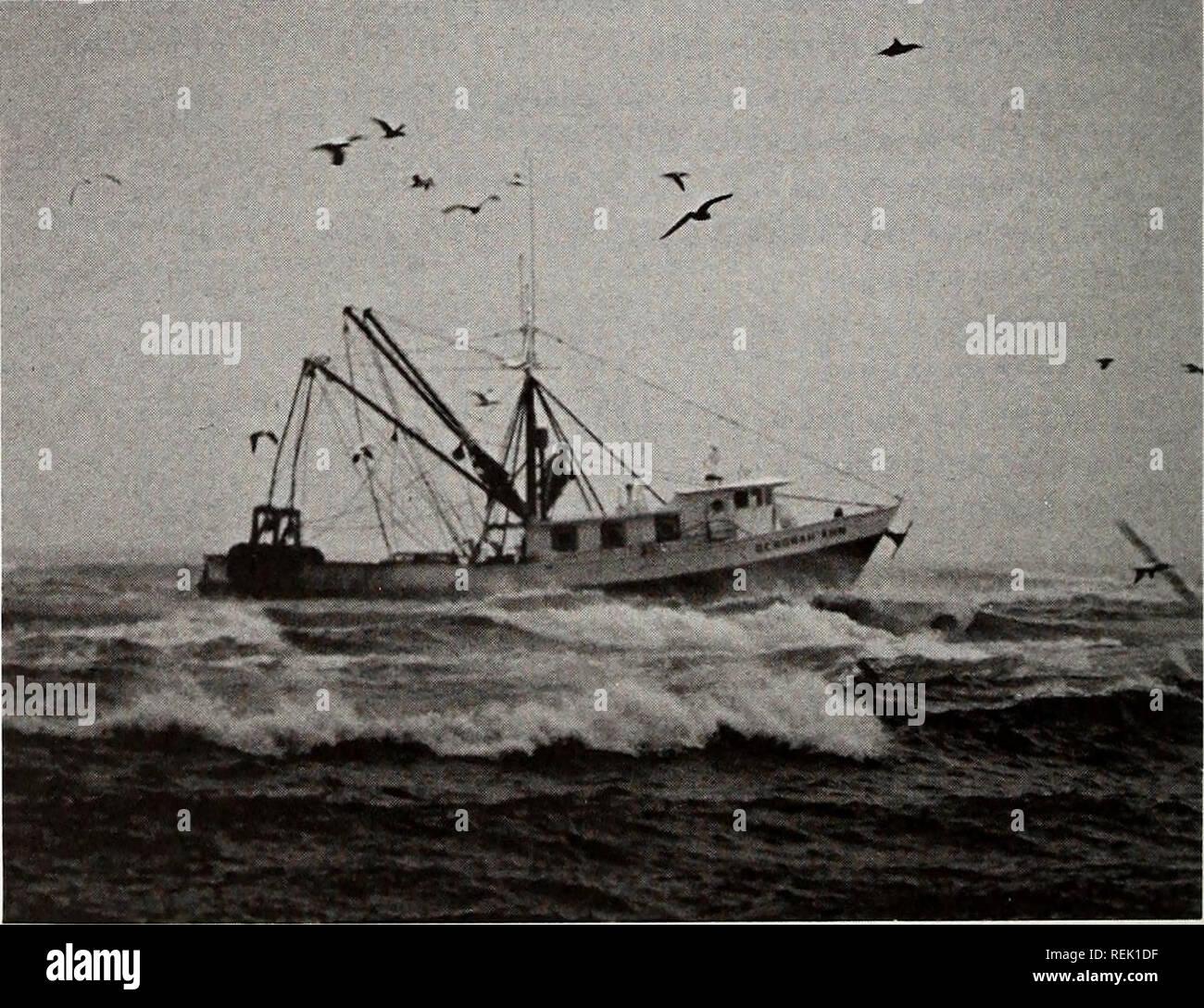 Coast watch  Marine resources