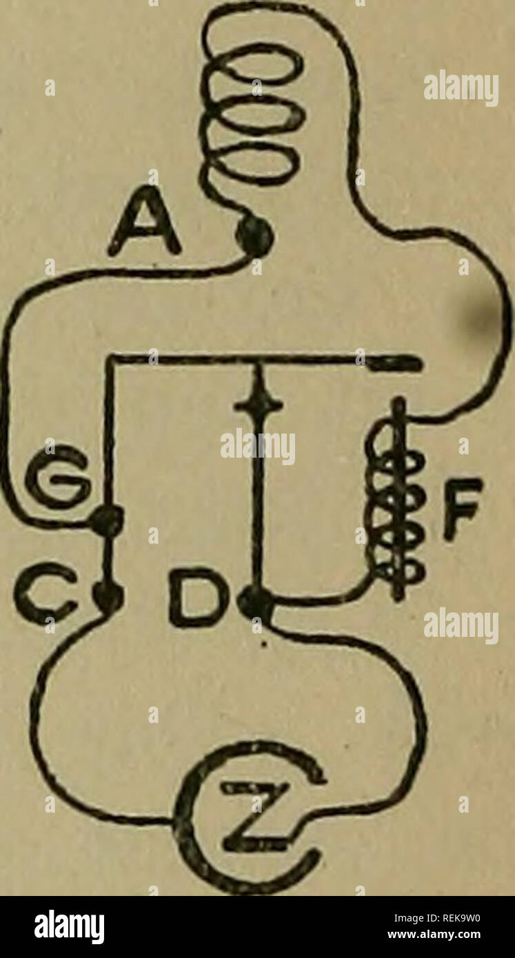 . A class book of (elementary) practical physiology : including histology, chemical and experimental physiology. Physiology. INTERRUPTED HELMH0LT2 Fig. 28. Connections of the primary circuit (after Waller). Helmholtz wipe for the equalisation of the make and break shocks (Fig. 28). Leave the connections as for interrupter shocks and add a wire between G and A. Raise the top contact screw E clear of the spring, and turn up the screw on pillar D until it touches the under side of the spring when the latter is held depressed against the electro- magnet. On closing the circuit the spring oscillate - Stock Image