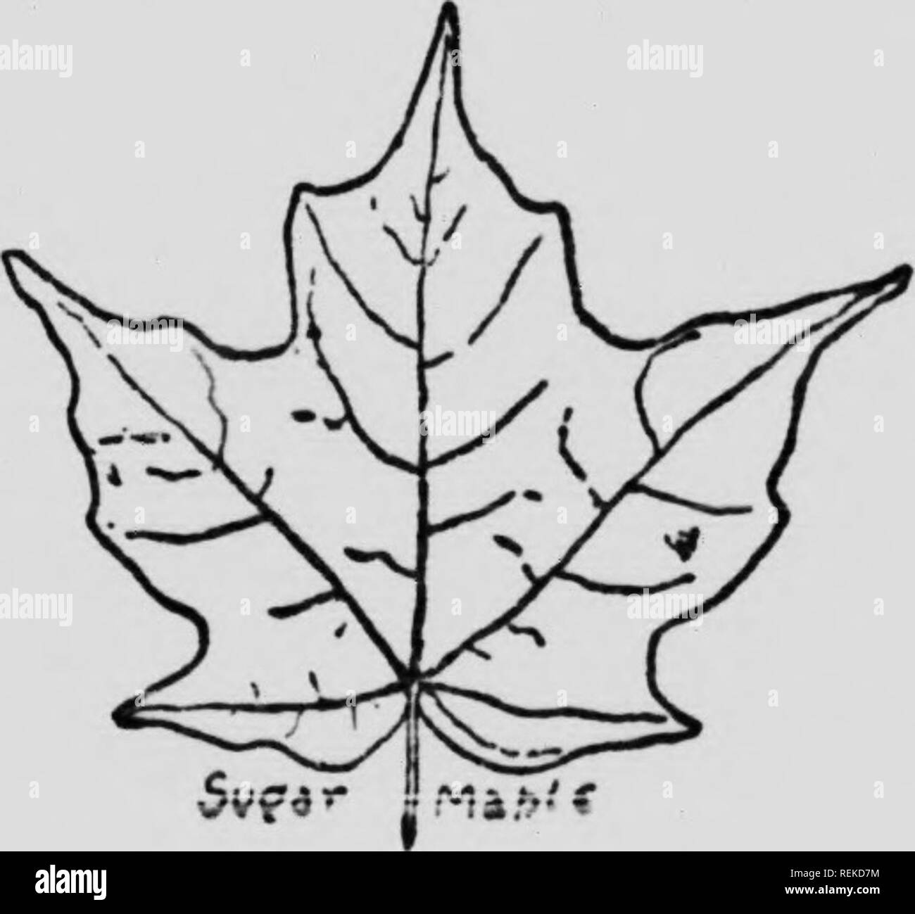 Rock Sugar Black and White Stock Photos & Images - Alamy