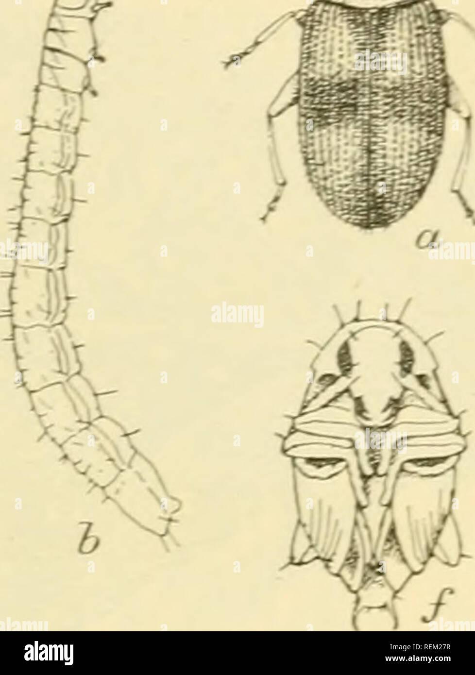 Circular  Insect pests