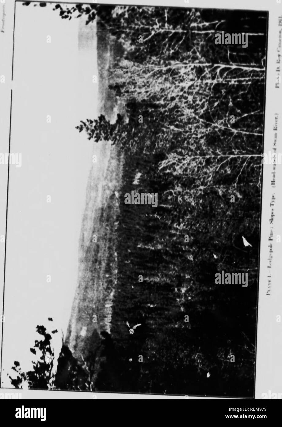 """. Report on timber conditions around Lesser Slave Lake [microform]. Forest protection; Forests and forestry; Forêts; Forêts et sylviculture. • t."""" . /}. Please note that these images are extracted from scanned page images that may have been digitally enhanced for readability - coloration and appearance of these illustrations may not perfectly resemble the original work.. Cameron, D. Roy, b. 1888; Canada. Forestry Branch. Ottawa : Govt. Print. Bureau Stock Photo"""