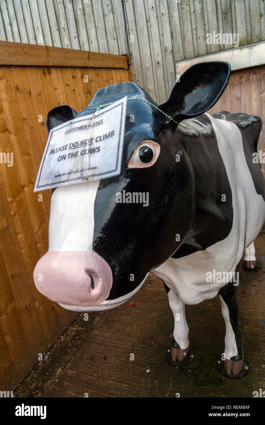 Life-size Model of Cow, Cannon Hall Farm, South Yorkshire - Stock Image
