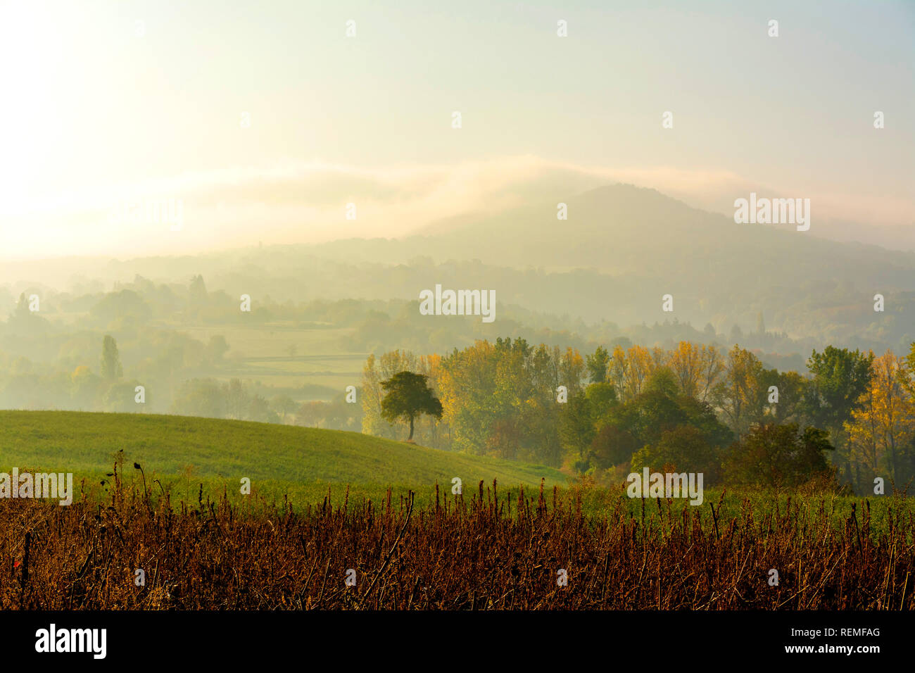 Isolated tree in the mist, Puy de Dome department, Auvergne Rhone Alpes, France, Europe Stock Photo