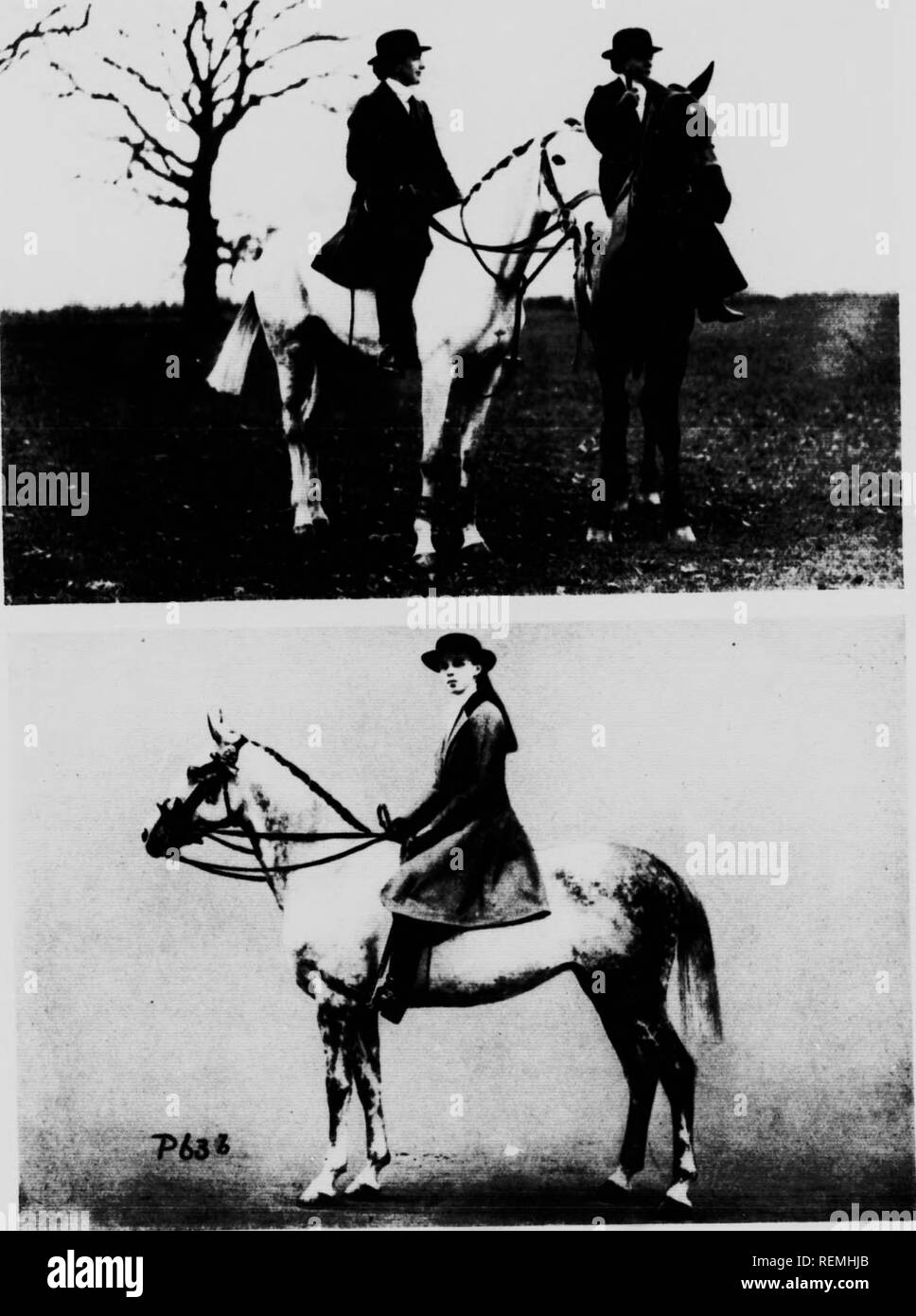 . Modern horse management [microform]. Horses; Horses; Chevaux; Chevaux. PLATE 63 r, s. Q^ Mrrt t>( l.tird Rothschild'! Stigh champion: Mill Hrtece on THE LADY ASTRIDE SADDLE nHi. Copyright Photo: Sport and General. 'Silver Grey.' fc, .An Inlernalional Hone Show Copyright Photo: W. A. Routh. Please note that these images are extracted from scanned page images that may have been digitally enhanced for readability - coloration and appearance of these illustrations may not perfectly resemble the original work.. Timmis, Reginald S. (Reginald Symonds), 1884-1968. London ; Toronto : Cassell - Stock Image