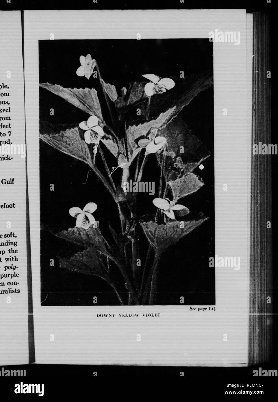 Canadian Wild Flowers Worth Knowing Microform Wild Flowers