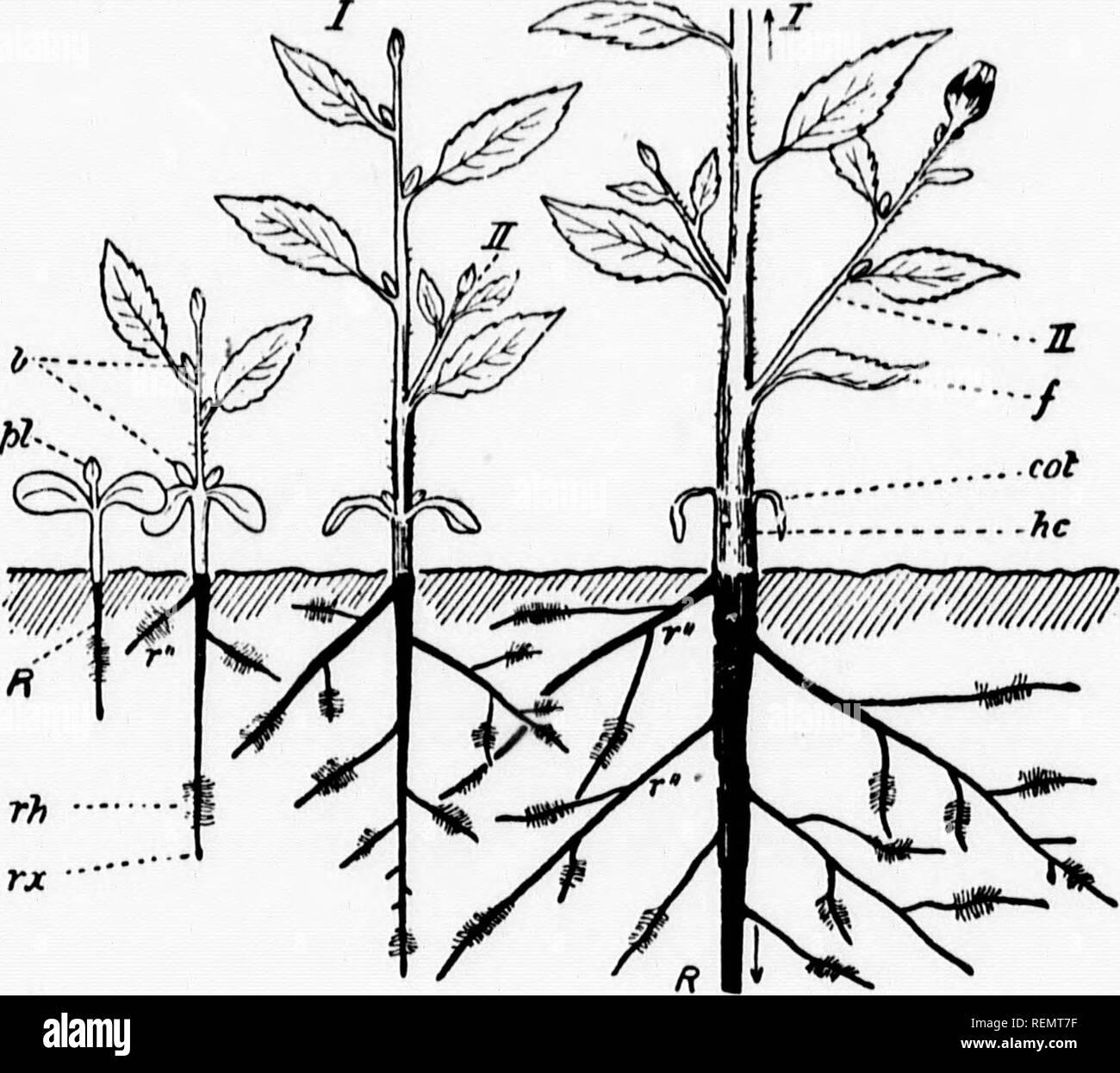 Elementary botany [microform]  Botany